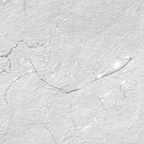 white_silverthread